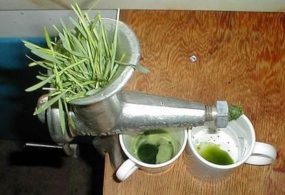 wheat grass, juice